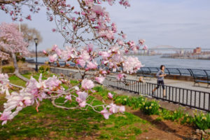 trees in Carl Schurz Park
